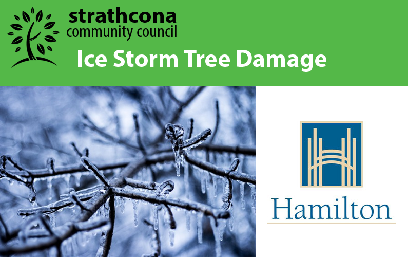 Tree Damage resulting from the Ice Storm